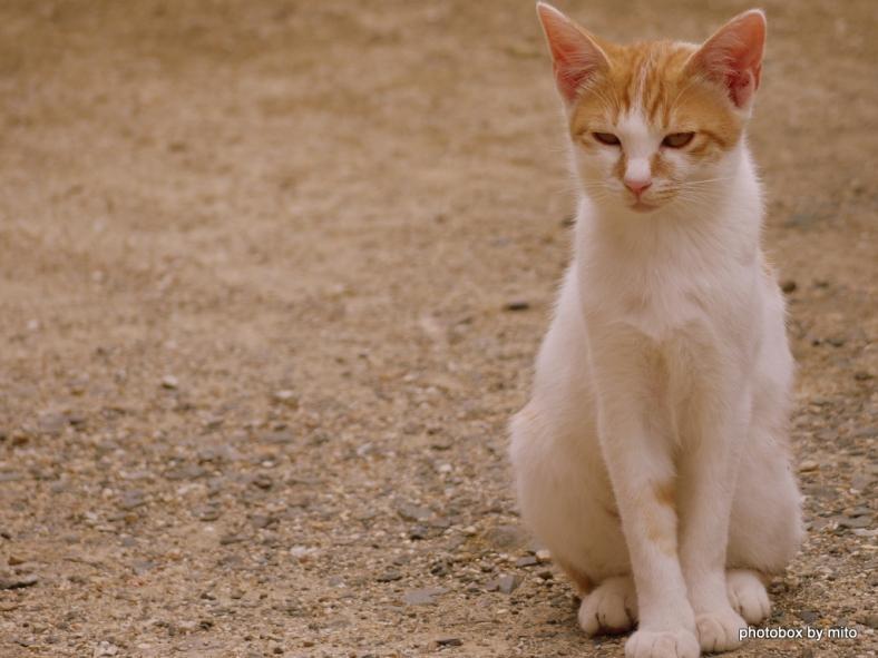 妙法寺の猫