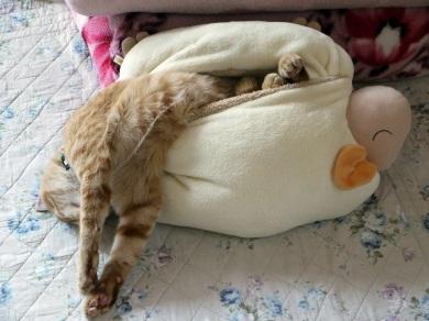 爆睡中。。。