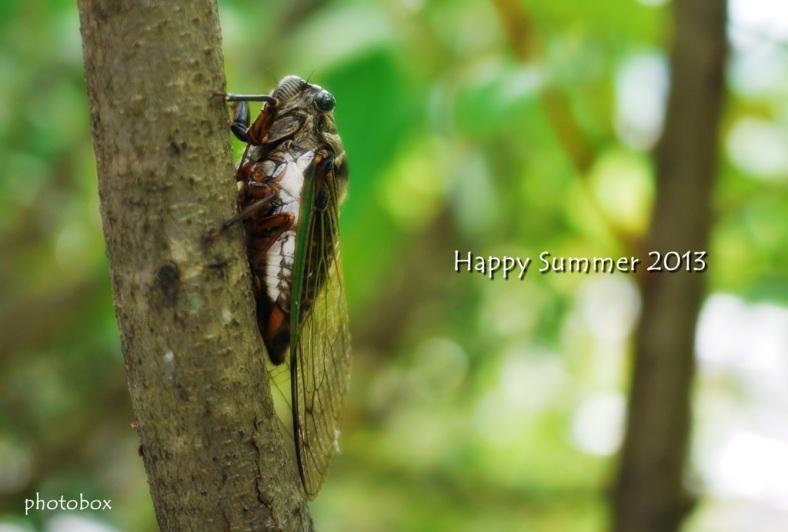Happy Summer 2013