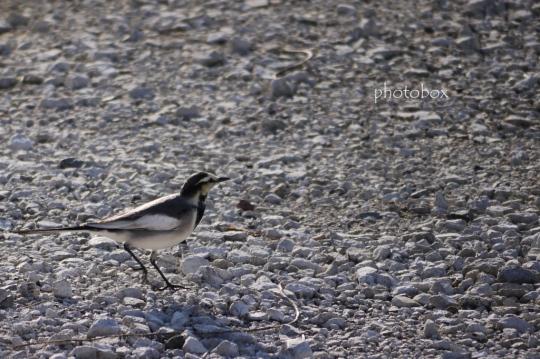 写真を撮りに行って、鳥に始まり鳥に終わる今回の旅。(爆) おあとがよろしいようで。。。
