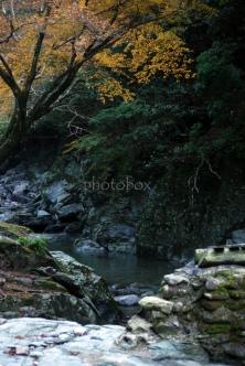 水辺の黄葉
