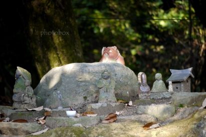 松山にはたくさんの狸にまつわる逸話がある。
