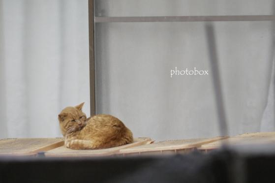 奥の民家で見かけた猫。 ミカン箱の上でまったり。