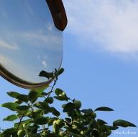 青い柿 青い空